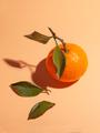 citrus orange ripe tangerine isolated on studio background - PhotoDune Item for Sale