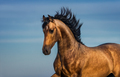 Portrait of light bay Andalusian horse. - PhotoDune Item for Sale