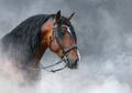 Spanish bay horse with long mane in light smoke. - PhotoDune Item for Sale
