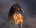 Spanish Horse in baroque bridle in light smoke. - PhotoDune Item for Sale
