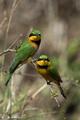 birds - PhotoDune Item for Sale