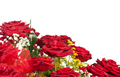 Corner of red roses - PhotoDune Item for Sale