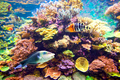 Tropical fish and coral reef - PhotoDune Item for Sale