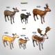 Deer Collection - 3DOcean Item for Sale