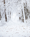 Snowy forest. Cold winter. nature - PhotoDune Item for Sale