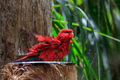colorful parrot in Loro Park in Tenerife, Spain - PhotoDune Item for Sale