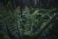 Fern in the rainforest - PhotoDune Item for Sale