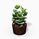 Crassula Moonglow Cactus Plant - Photoscanned PBR - 3DOcean Item for Sale
