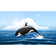 Orca or Killer Whale Jumps Out of the Water - GraphicRiver Item for Sale