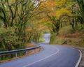 Autumn Forest crossed by an Empty Road - PhotoDune Item for Sale
