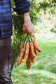 Farmer with newly picked carrots - PhotoDune Item for Sale