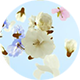 Flowers and Petals Logo - VideoHive Item for Sale