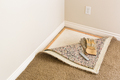 Gloves and Utility Knife On Pulled Back Carpet and Pad In Room. - PhotoDune Item for Sale