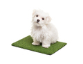 Cute Maltese Puppy Dog Sitting on Section of Artificial Turf Grass On White Background - PhotoDune Item for Sale