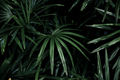 Palm leaves with background - PhotoDune Item for Sale
