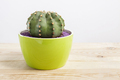 Genus Echinocactus Cactus a potted plant in a green pot - PhotoDune Item for Sale