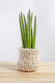 Decorative house plant - Sansevieria cylindrica on a pot in knitted case - PhotoDune Item for Sale