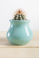 Genus Echinocactus Cactus a potted plant in a turquoise pot - PhotoDune Item for Sale