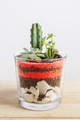 Succulent plants arrangement in a glass vase - PhotoDune Item for Sale
