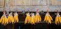 Piles of corn hanged to dry - PhotoDune Item for Sale