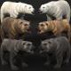 Bear Megapack 3D Model Collection - 3DOcean Item for Sale