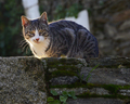 Grey Urban Wild Cat on a Stone Wall - PhotoDune Item for Sale