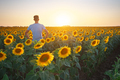 Man in meadow of sunflower at sunset. - PhotoDune Item for Sale