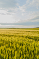 Agricultural Growth -Various Fields - Agriculture Farming Field - PhotoDune Item for Sale