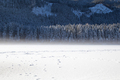 frozen lake and beautiful view of the forest in winter - PhotoDune Item for Sale