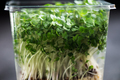 Fresh Cress Salad on Plastic Container - PhotoDune Item for Sale
