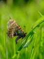 Butterfly on a grass - PhotoDune Item for Sale
