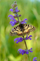 Butterfly on a flower - PhotoDune Item for Sale