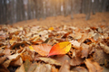 Autumn leaves on the forest ground - PhotoDune Item for Sale