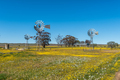 Three windmills in field of wildflowers at the Hantam Botanical Garden - PhotoDune Item for Sale