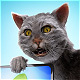 Funny Dramatic Cat - VideoHive Item for Sale