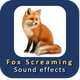 Fox Screaming Sound