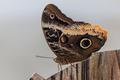 butterfly garden, Dubai - PhotoDune Item for Sale