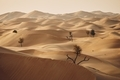 Trees in desert landscape - PhotoDune Item for Sale