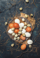 Multicolored chicken and quail eggs with straw and branches - PhotoDune Item for Sale
