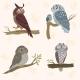 Owl Set - GraphicRiver Item for Sale