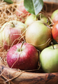 Fresh harvest of autumn sweet apples in a large bowl - PhotoDune Item for Sale