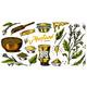 Mustard Seeds Set - GraphicRiver Item for Sale
