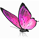 Butterfly Rigged PBR - 3DOcean Item for Sale
