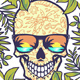 Skull with Round Tropical Border - GraphicRiver Item for Sale