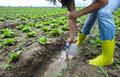 Woman mesures irrigation water with digital PH meter in watering canal. - PhotoDune Item for Sale