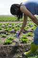 Woman use digital soil meter in the soil. Lettuce plants. Sunny day. - PhotoDune Item for Sale