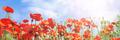 Poppy flowers meadow - PhotoDune Item for Sale