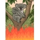 An Australian Koala Was Caught in a Forest Fire - GraphicRiver Item for Sale