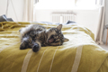 Lovely cat lying on the bed and stretching paws - PhotoDune Item for Sale