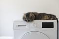 Cute cat lying down on the washing machine - PhotoDune Item for Sale